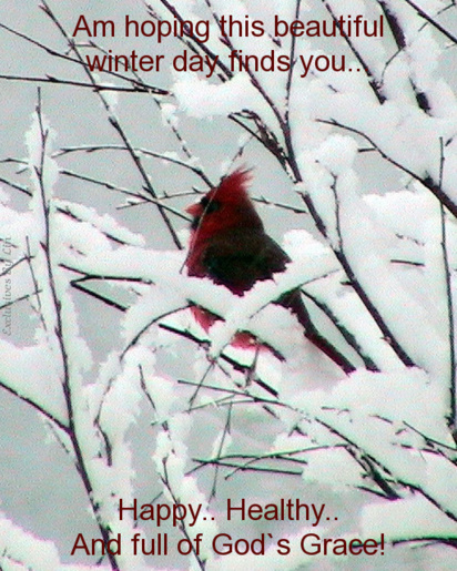 Cardinal, snow, and text here