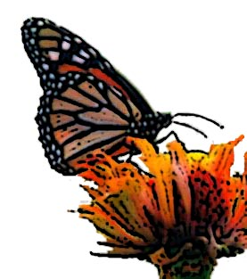 Butterfly image here