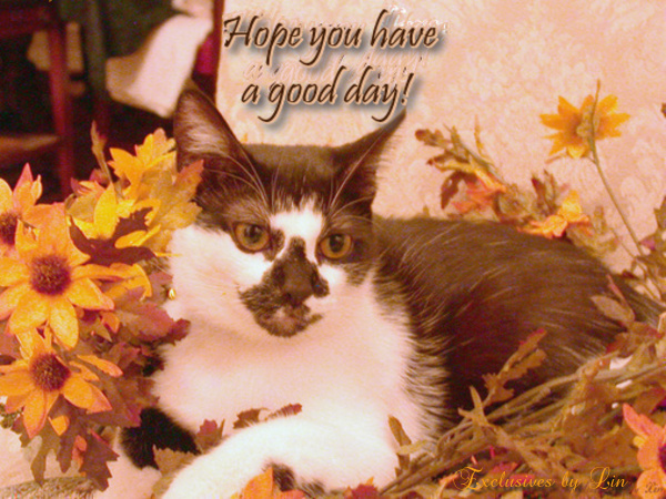 Hope you have a good day, with kitty laying in Autumn leaves. Image by Bill Jacobus