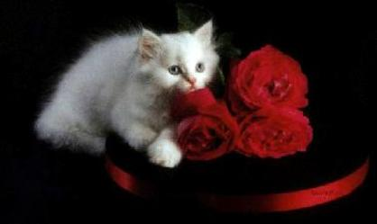 Beautiful cat and roses here