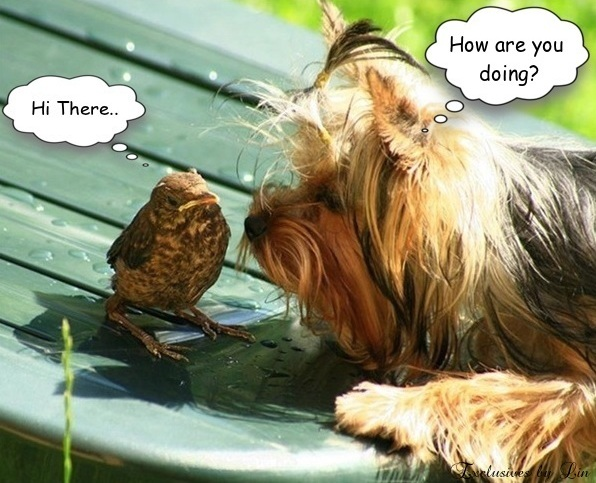 Hi There How re You Doing? with cute yorkshire terrier and bird