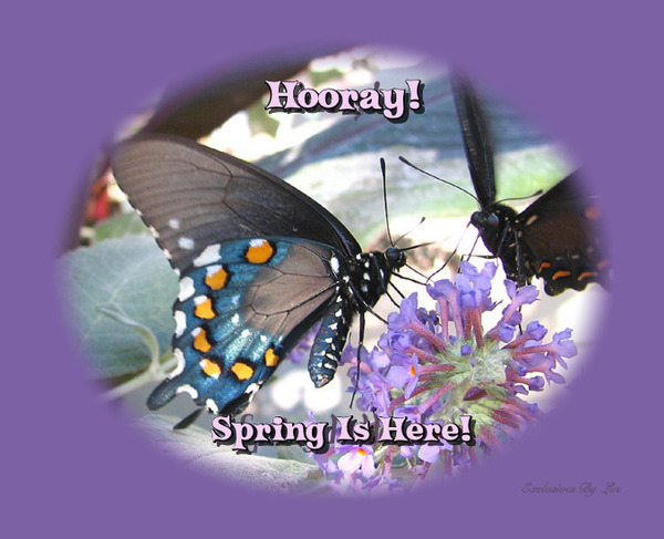Spring is here on beautiful butterfly image