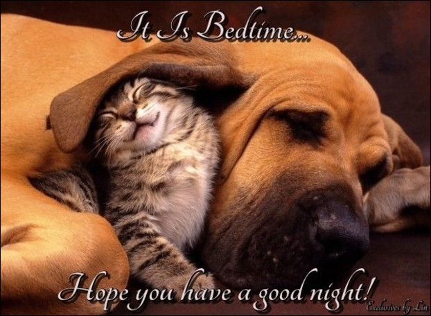 good night image with puppy and kitten sleeping