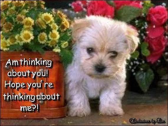 Am thinking about you, hope you are thinking about me, with cute puppy