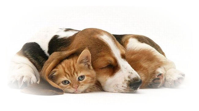 darling image of sleeping dog with kitten
