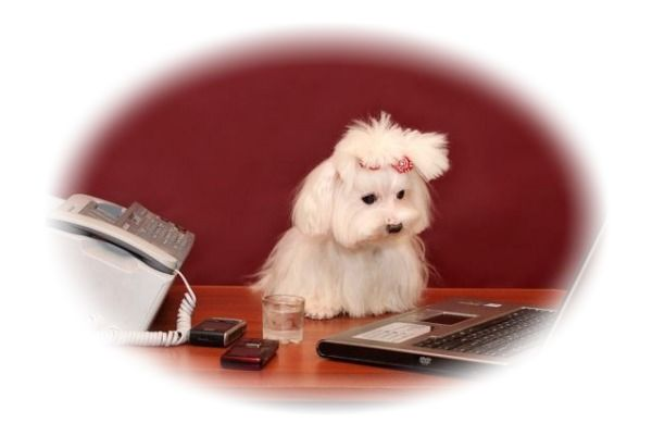 Image of cute puppy looking at laptop here