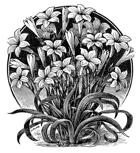 black and white floral Image here