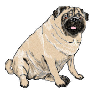 pug image here click to see site