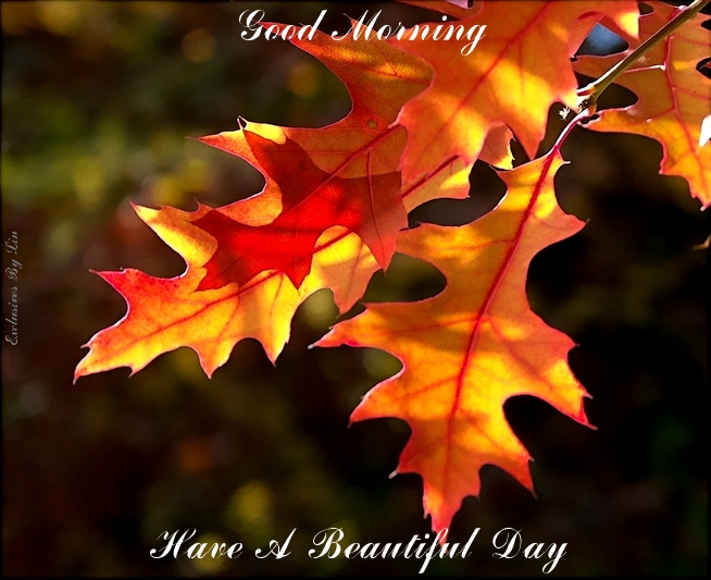 Good Morning, have a beautiful day with autumn leaves here