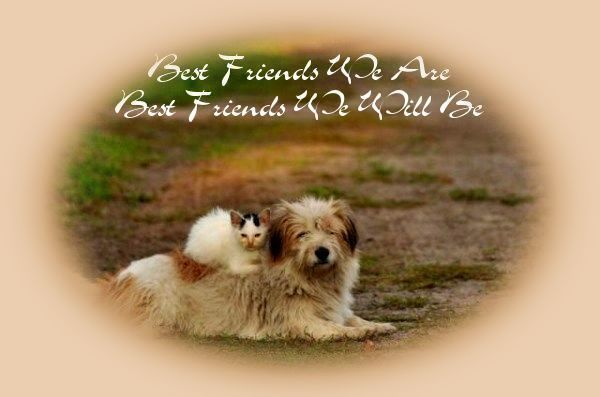 Best friends we are..best friends we will be with kitty and puppy