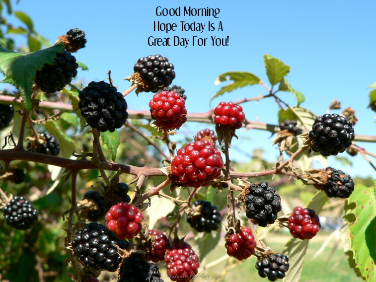 image of blackberries with text here